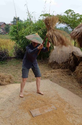 Rice 9-1